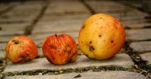 Echte Äpfel