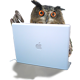 Rockin Owlies on duty